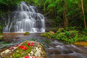 Картинки Камни Водопады Листья Мха Природа