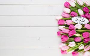 Картинка Тюльпаны Букет Доски Слово - Надпись Немецкий Шаблон поздравительной открытки