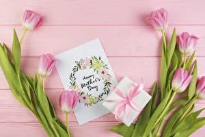 Фотографии Тюльпан День матери Розовая Инглийские Цветы