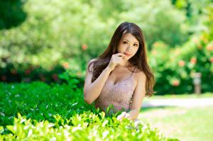 Фотография Азиаты Милый Платье Смотрит Размытый фон молодая женщина