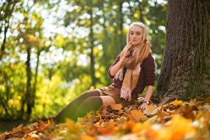 Фотография Осень Блондинка Сидит Лист Юбке Свитере Шарф Взгляд Sarah Девушки Природа