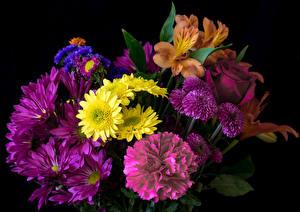 Обои для рабочего стола Букет Альстрёмерия Роза Хризантемы Гвоздики Белый фон Цветы