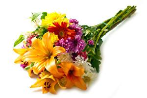 Фотографии Букет Лилия Хризантемы Гербера Белом фоне цветок