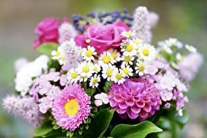 Фотография Букет Розы Георгины Крупным планом Размытый фон Цветы