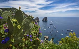 Обои Кактусы Яхта Море Италия Остров Заливы Горизонт island Capri Природа