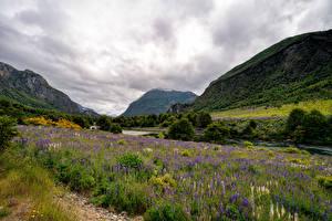 Фотография Чили Горы Речка Люпин Облака Долина Patagonia