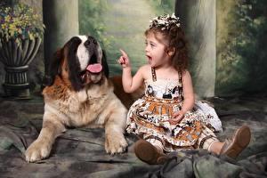 Обои Собака Пальцы Девочка Сидящие Языком Сенбернар ребёнок Животные