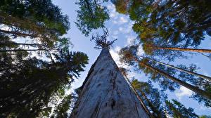 Фотографии Финляндия Лес Дерево Вид снизу Ствол дерева