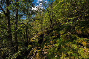 Фото Норвегия Лес Камень Дерева Мхом Hardangerfjord