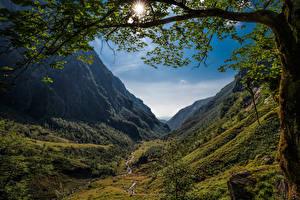 Картинка Норвегия Горы Деревья Ветка Солнца Долина Hardanger Природа