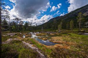 Картинки Норвегия Парк Гора Дерева Облака Rago National Park Природа