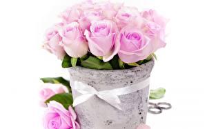 Картинка Розы Букеты Розовая Цветы