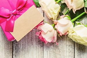 Фотография Роза День святого Валентина Шаблон поздравительной открытки цветок