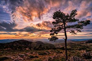 Фотографии Испания Гора Вечер Рассветы и закаты Небо Облако Деревья Catalonia Природа