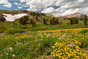 Фотографии США Гора Луга Облачно Трава Medicine Bow-Routt National Forests Природа
