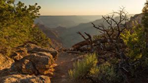 Фотография Штаты Парк Гранд-Каньон парк Камень Утес Arizona Природа