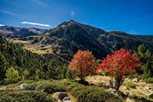 Фото Андорра Гора Осенние Дерево Pyrenees Природа