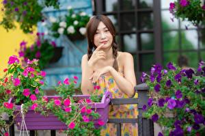 Картинка Азиаты Позирует Руки Коса Взгляд молодая женщина
