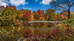 Фотография Осень Мосты США Панорама Нью-Йорк Природа