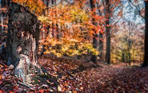 Картинка Осень Лес Пень Лист Размытый фон Природа