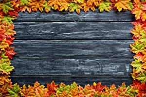 Фотографии Осень Шаблон поздравительной открытки Доски Клёна Листва