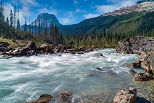 Обои Канада Парк Горы Лес Речка Камни Пейзаж Yoho National Park