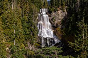 Обои Канада Водопады Скалы Деревья Alexander Falls Природа