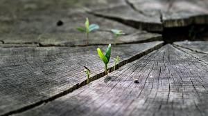 Картинка Вблизи Макросъёмка Растения Пне