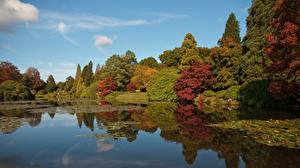 Фото Англия Осень Пруд Дерево Sheffield Park Природа