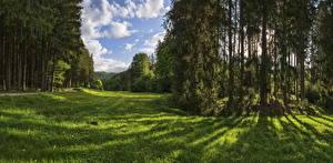 Фотографии Германия Парк Лес Дерево Траве Трава Naturpark Augsburg Природа