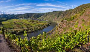 Фотография Германия Речка Виноградник Холмы Calmont, Mosel River Природа