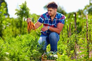 Фото Мужчина Овощи Морковка Сидит