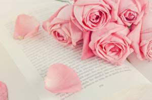 Обои Роза Розовых Книги Цветы