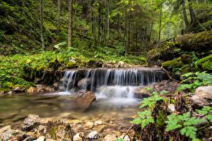 Обои Словакия Леса Камни Деревьев Ручей Spisska Nova Ves Природа