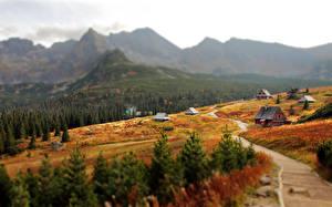 Фотографии Словакия Горы Осень Деревня Боке Tatra Mountains Природа