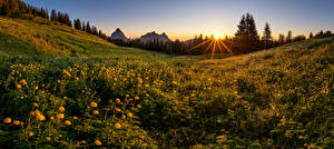 Фотография Швейцария Горы Луга Вечер Рассвет и закат Альпы trollius, Schwyz