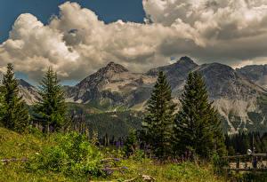 Фотографии Швейцария Гора Люпин Пейзаж Альп Облачно Ели Arosa, Grisons Природа