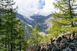 Картинка Швейцария Горы Камень Альп Дерева Randa Природа