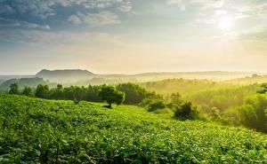 Фотографии Холмов Тумана Tea plantation