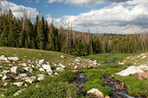 Картинка Штаты Лес Камни Ручей Облака Medicine Bow-Routt National Forest Природа