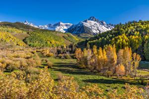 Картинка США Гора Осенние Дерево Mount Sneffels Природа