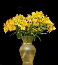 Обои Альстрёмерия Черный фон Вазы Желтые Цветы
