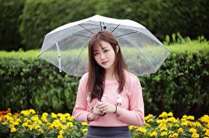 Картинка Азиатки Свитера Зонтом Смотрят молодая женщина