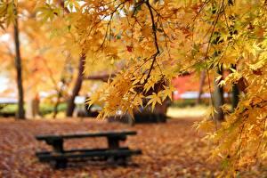 Фотографии Осень Ветки Клёна Боке Скамейка Природа