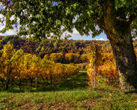 Фотографии Осенние Германия Виноградник Деревья Кусты Трава Baden-Wuerttemberg Природа