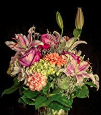 Картинка Букеты Розы Лилия Альстрёмерия Гортензия Черный фон цветок
