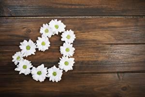 Фотография Ромашка Сердце Доски Шаблон поздравительной открытки цветок