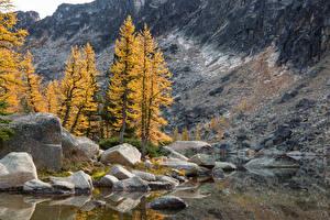 Обои Канада Осень Камень Утес Дерева Eastgate Природа