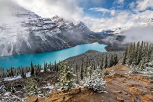 Картинки Канада Гора Озеро Пейзаж Облако Дерево Peyto Lake, Alberta
