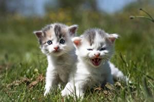 Картинки Кот Трава Две Котят Милый